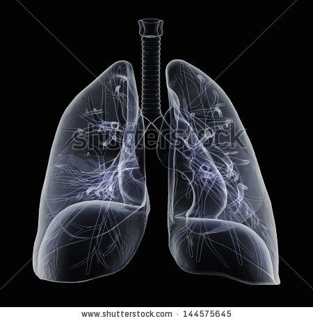 Human lungs and bronchi in x-ray view by goa novi, via Shutterstock