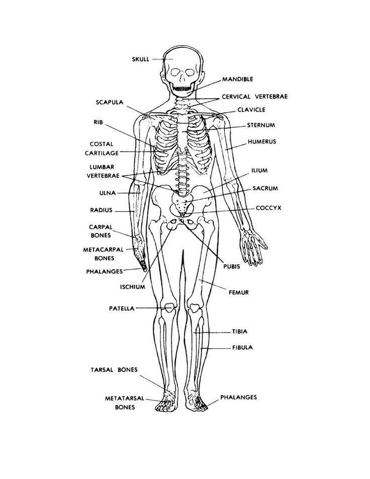 skeletal system diagram label human skeleton labeled back view | anatomy and physiology ...