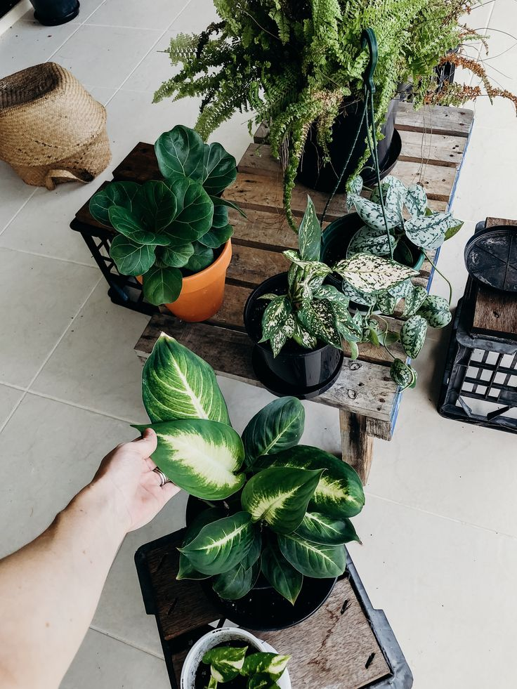 My plant collection obsession