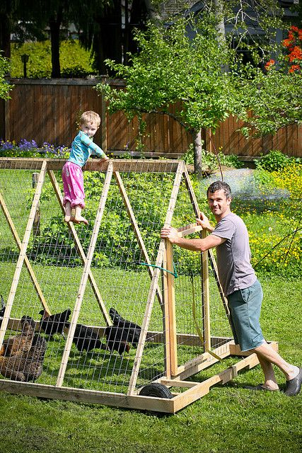 Made with wheelbarrow tires and chicken wire. For 5-8 chickens.