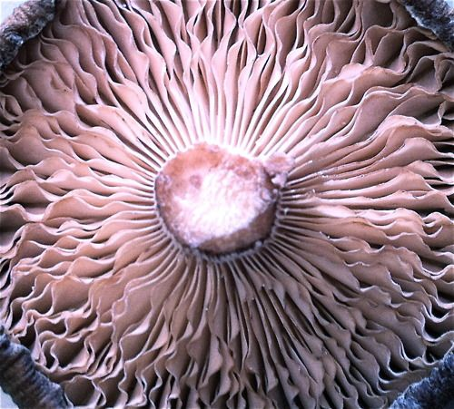 63 best Research - natural forms images on Pinterest ...