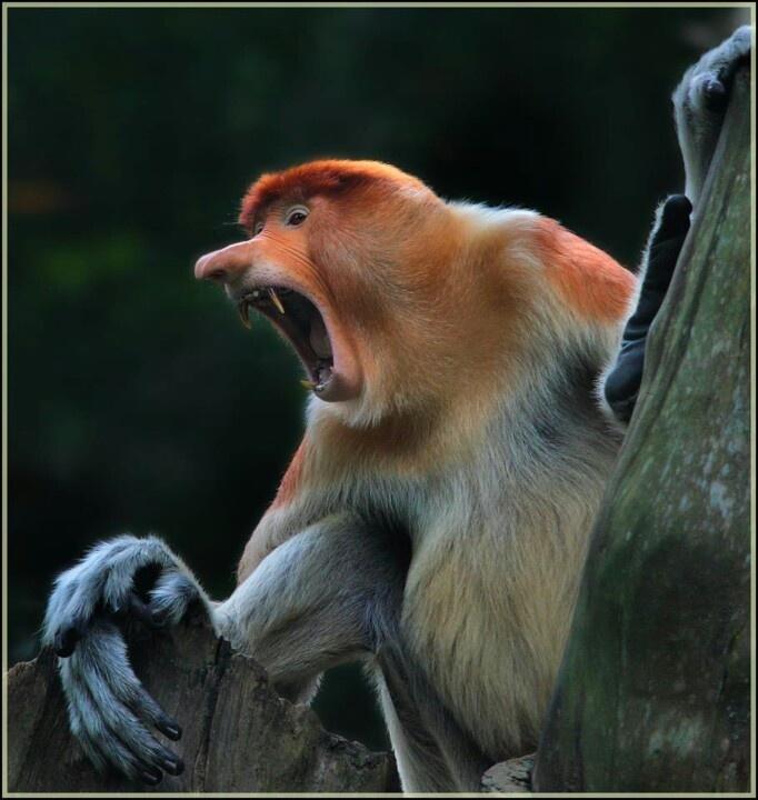 Its Monday | Beautiful creatures | Pinterest