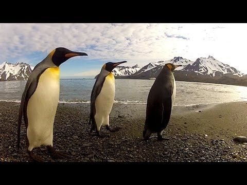 GoPro: Penguin Dance-Off - LOVE this!