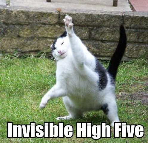 high five: High Five, Funny Things, Invi Funny, Cat And Invi, Invi Cat, Funny Cat, Cat Meow, Funny Stuff, Funny Animal