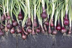 Onions - #13 on the list of zero calorie foods