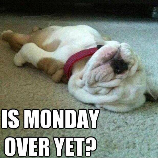 14 best images about Ed go Bulldogs! on Pinterest ...