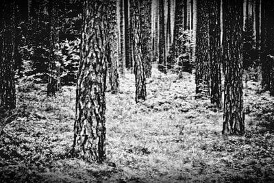 bwstock.photography - photo | free download black and white photos  //  #forest