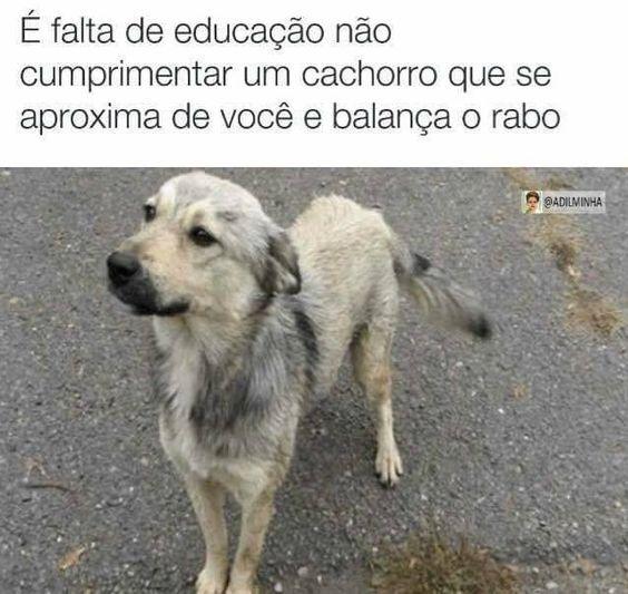 EU FALO OI, ABRAÇO, BEIJO E AMO MTO!<3 <3 <3 #petmeupet #filhode4patas #maedepet #maedecachorro #paidecachorro #cachorro #petshop #petshoponline #amocachorro #amoanimais