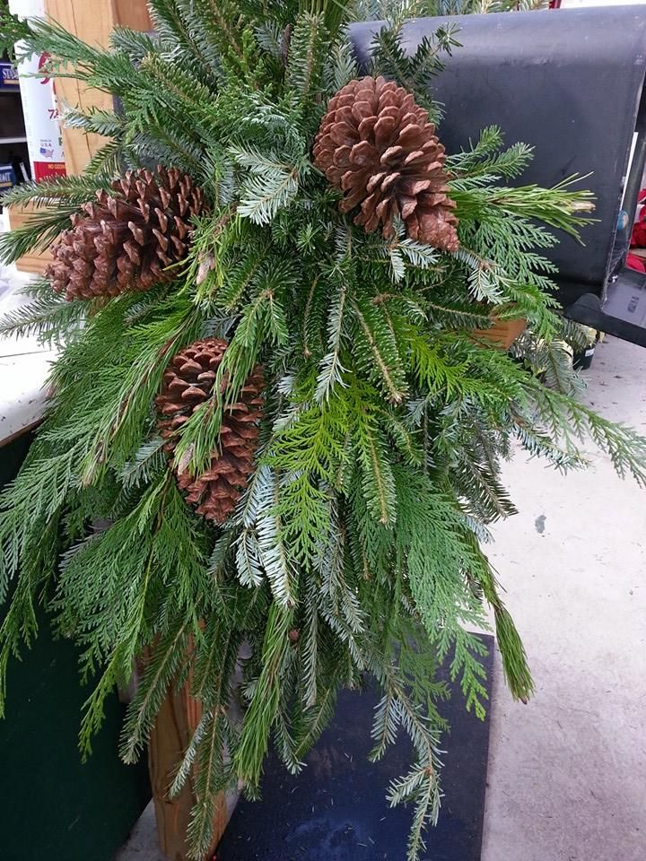 Mailbox greenery at Andy's Creekside Nursery in Vestavia Hills, AL. Large saddle - Frasier fir, port orford cedar, and pine cones.