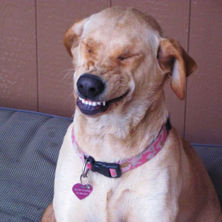 Image result for site:pinterest.com dogs mid sneeze