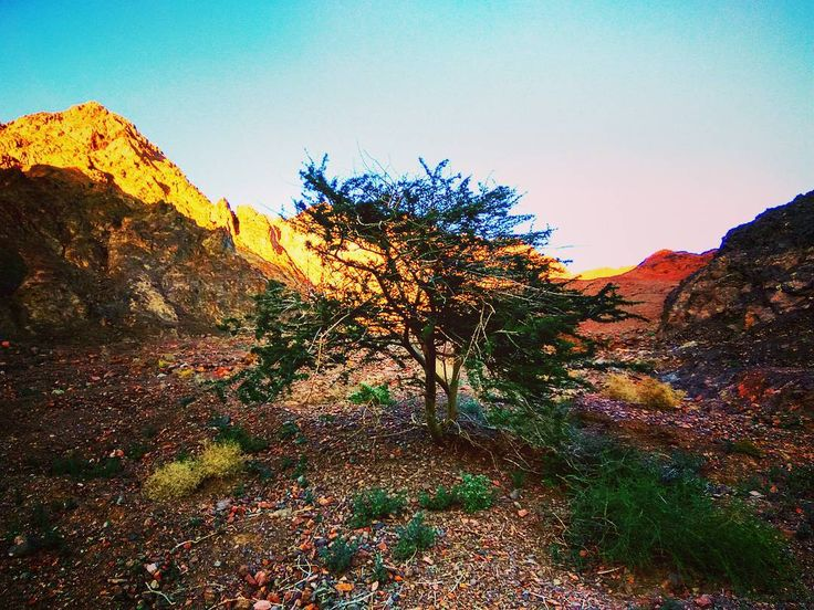 #Israel #Eilat #IsraelSouth #RedSea #Израиль #КрасноеМоре #Эйлат #Hotel #Пальмы #Пляж #Holidays #ИзраильЮг #Юг #אילת #Desert #Negev #Пустыня #Негев #Freediving  #צלילה #Diving #Isrotel #Fatal #Исротель #Фаталь #Hotelisrael #Palms #Beach eilat-il.com | freediving.eilat-il.com