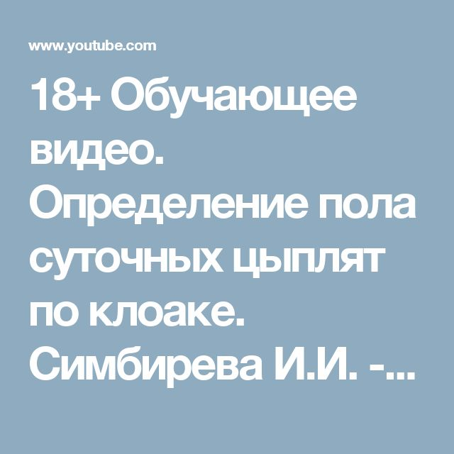 18+ Обучающее видео. Определение пола суточных цыплят по клоаке. Симбирева И.И. - YouTube