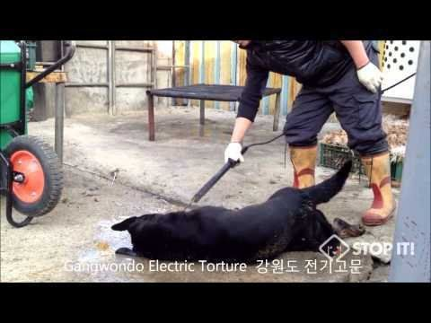 Petition · Premier Rachel Notley: Tell Sister Province, Gangwon-do, Korea, That We're Opposed to Torture/Consumption of Dogs · Change.org  - 18.317//10-27-2015  #Petition #AnimalRights #StopMeatTrade #SouthKorea  #EndPheongchang2018