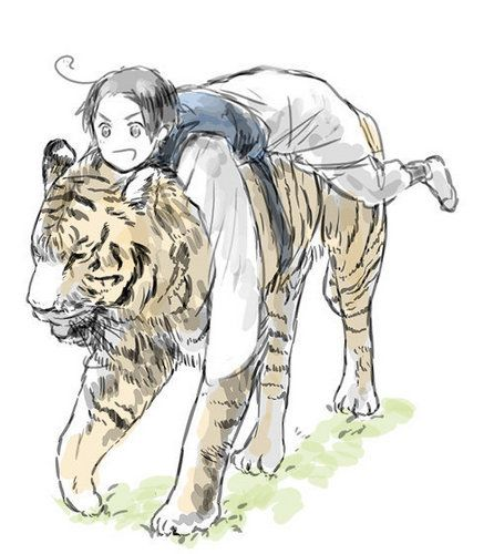 Korea NO. <<< KOREA YAAAS. <<<WHAT IS EVEN GOING ON HERE <<< NO IDEA BUT WAIT FOR MEEEE *jumps on another tiger and follows* WAIT KOREA