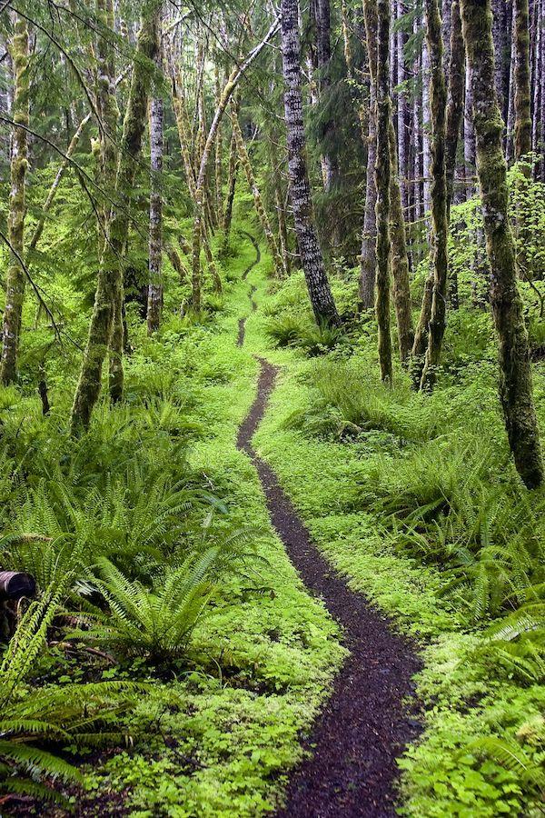 Aurora Ridge Trail, Sol Duc Valley, Penisola Olimpica, Washington