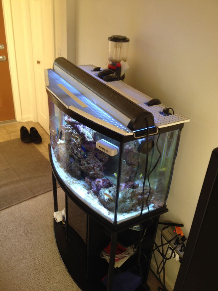17 best images about fish tank on pinterest fish tank for Fish tank screen