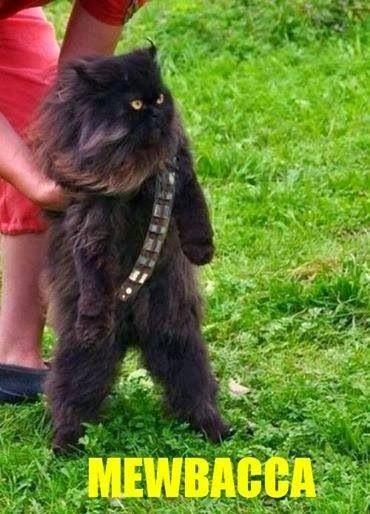 Wookie Cat