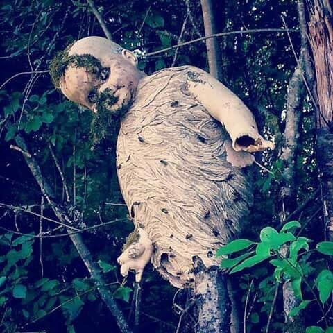 Wasps build nest around a discarded child's doll from reddit