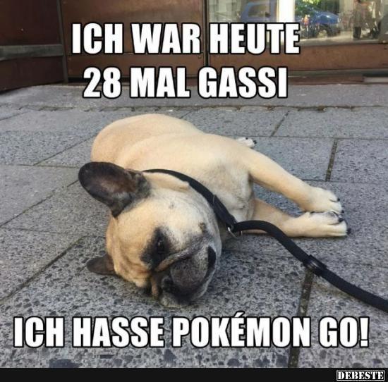Ich war heute 28 mal Gassi. Ich hasse Pokémon-GO!.. | Lustige Bilder, Sprüche, Witze, echt lustig
