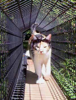Take the 'P' from 'Patio,' substitute a 'C' and you get a suitably named Catio, an outdoor cat house. Catio is where indoor cats can hang outside of their houses or apartments in an outdoor enclosure that safely keeps them in and predators out.  If you have time to build a catio, you can do-it-yourself, but there are several options.