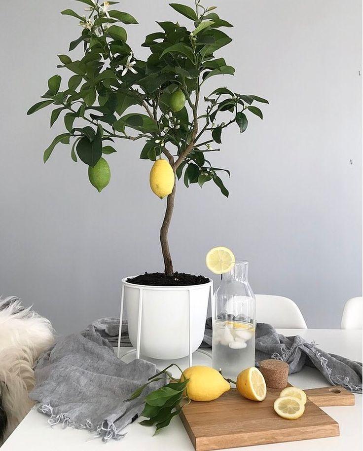 5 Easiest Fruit Plants To Grow Indoors Growing Herbs 400 x 300