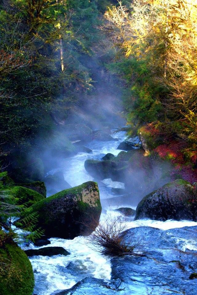 977 best Made in Oregon images on Pinterest Forests, Nature and