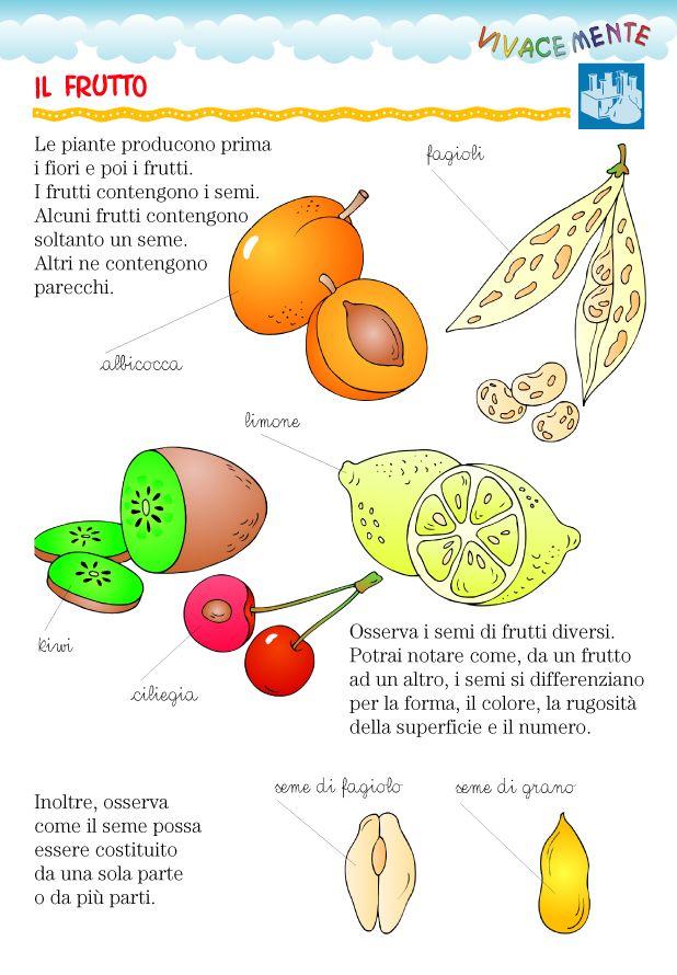 Ogni frutto presenta semi caratteristici.   Osserva per esempio la mela, l'albicocca, l'uva, la ciliegia...