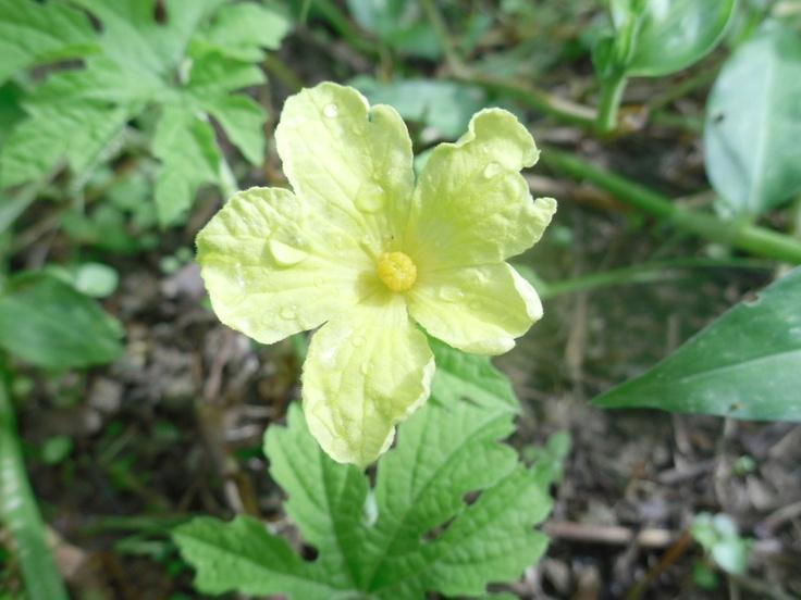 random flowers.. :): Random Flowers, Nature Pics