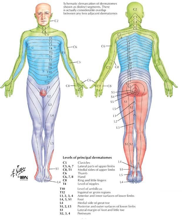 Dermatome map of body.