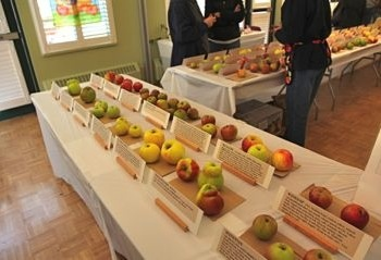 """The annual UBC Apple Festival on the 2nd weekend of October is on our fall """"must do"""" list."""