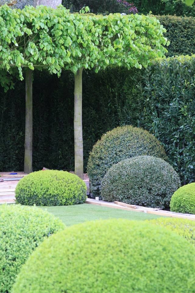 table top pleached lime trees and formal topiary || The Telegraph Garden, designed by Tommaso del Buono