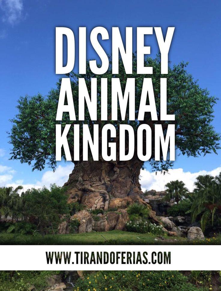 Principais atrações do parque Disney Animal Kingdom.