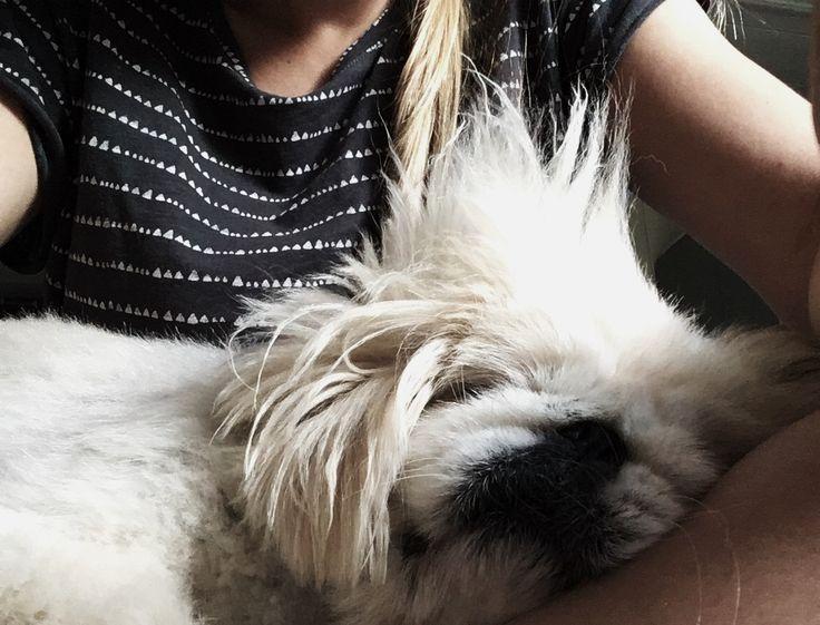 #dog #White #pekinese