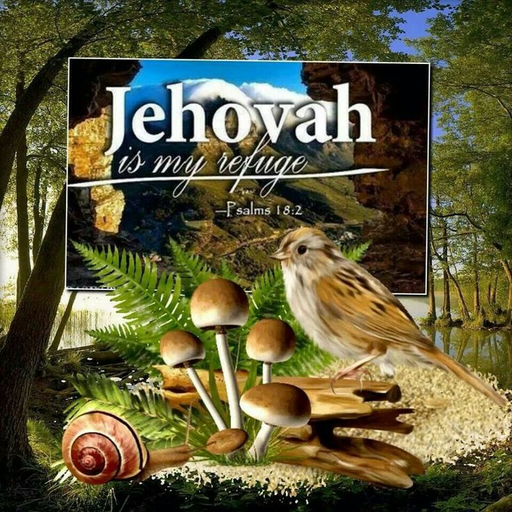 Special gift from jehova cadence lux