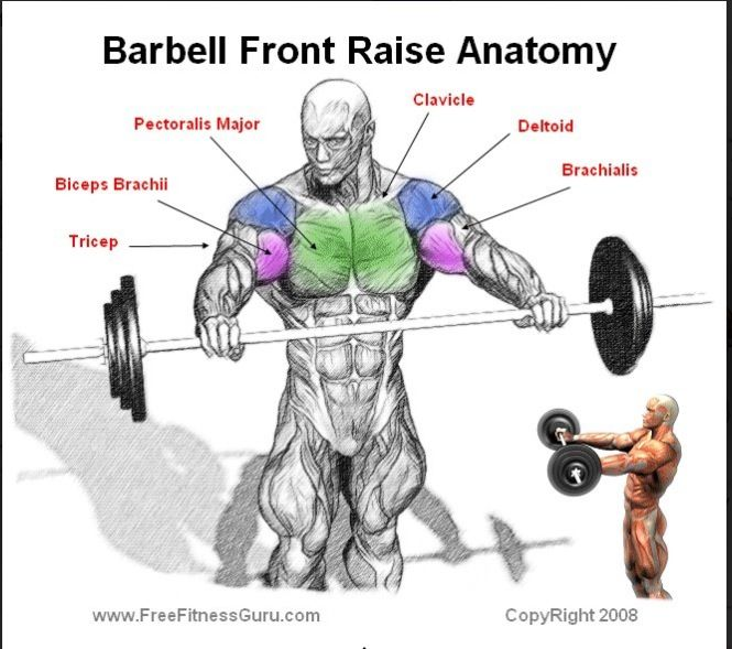Barbell Curl Anatomy: 80 Best Images About Build It On Pinterest