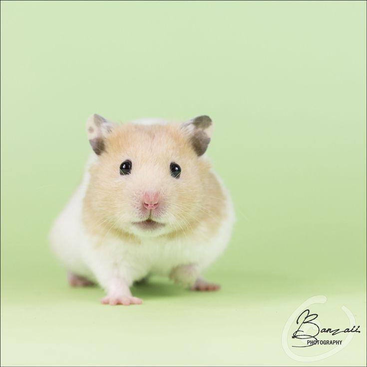 Mejores 77 imágenes de Cuteness overload en Pinterest | Animales ...
