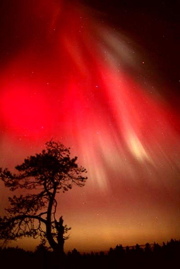 Magic Aurora Colours In Arcipelago Winter