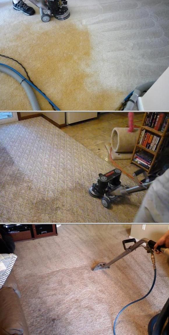 this commercial carpet cleaning company provides pet odor and stain removal services as well these