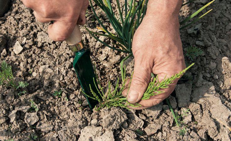 Ein vor der Pflanzung eingebautes Vlies erspart später das Jäten von lästigem Unkraut