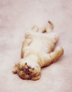 The Lion Sleeps Tonight//