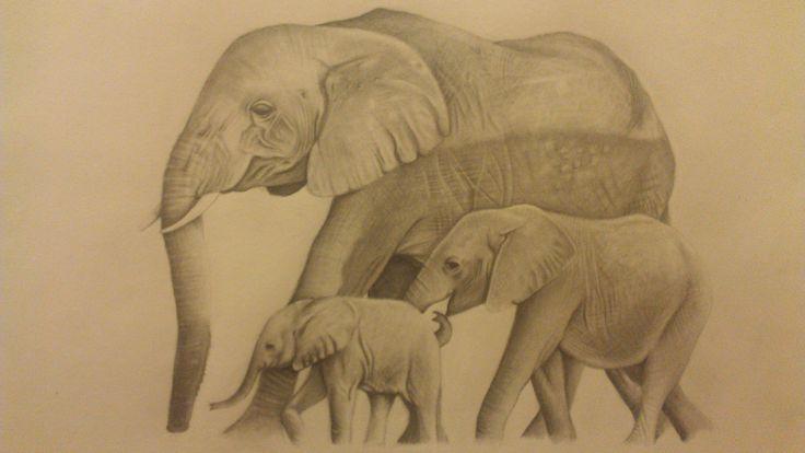 elephants i drew