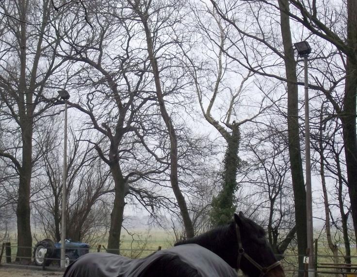 Paardenbak verlichting  http://www.wjbverlichting.nl/project-verlichting/paardenbak-verlichting/  #paardenbakverlichting