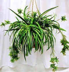 Bathroom Plants: Tips For Using Plants In Bathrooms