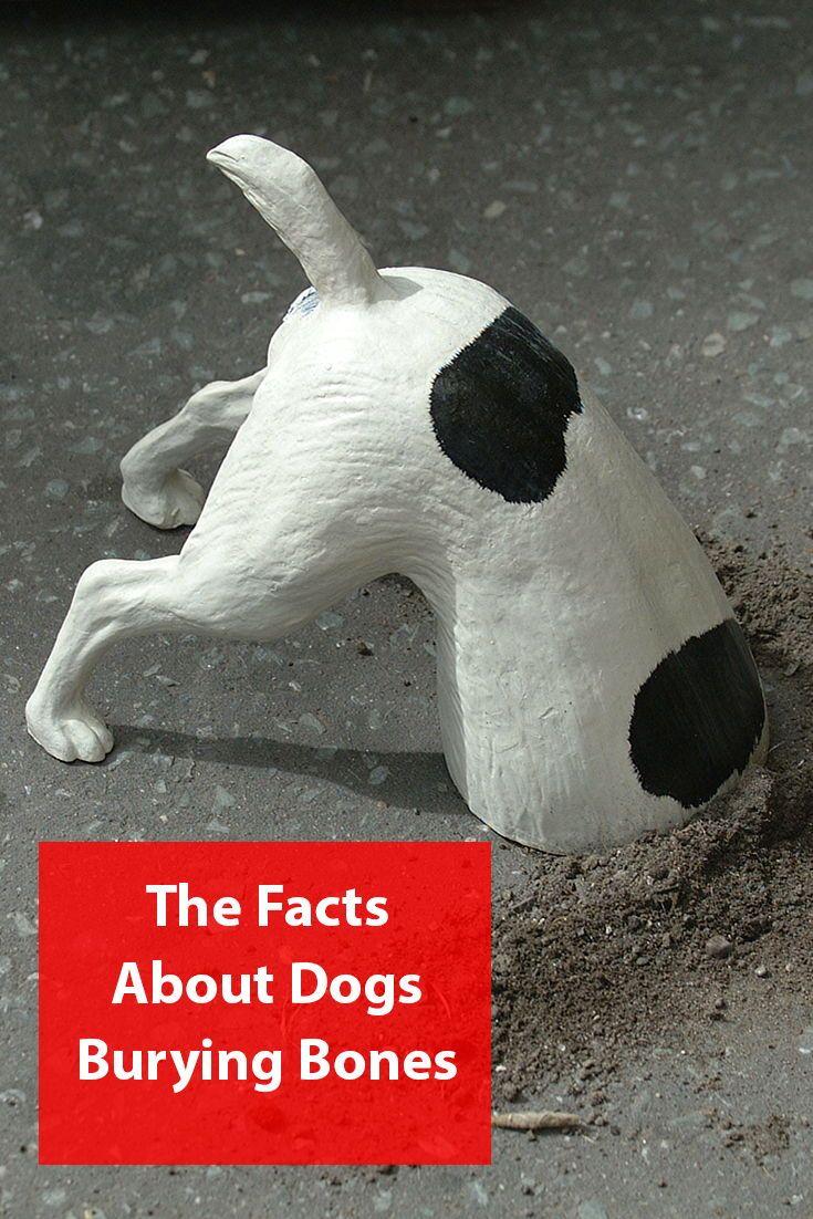 Why Do Dogs Bury Bones Dog Facts Dog Behavior Dogs