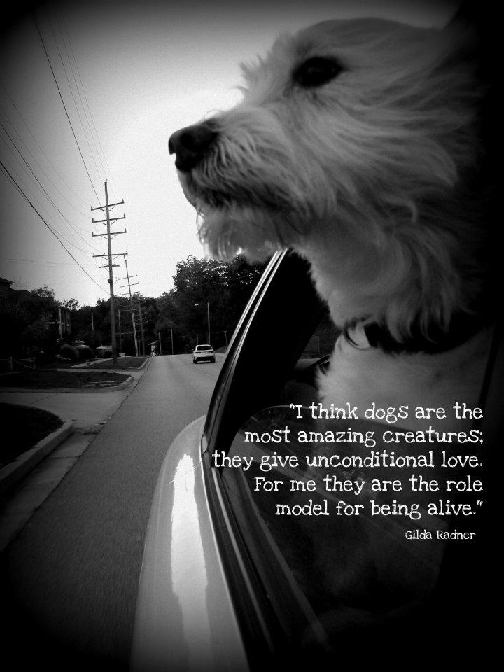 Dog Dogs Quote Quotes Terrier Car Window Friend