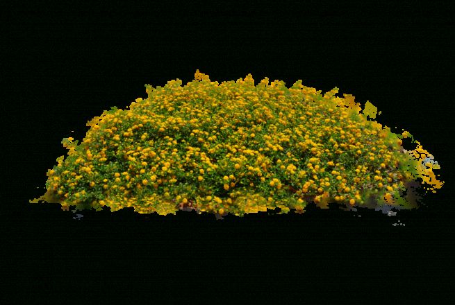 10 Flower Bed Top View Png Landscape Architecture Plants Bed Top View Flower Beds