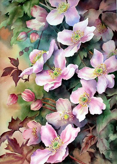 "art by anne mortimer | Clematis Montana"" by Ann Mortimer 