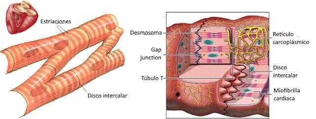 B.log.ia 2.0: El sistema muscular I