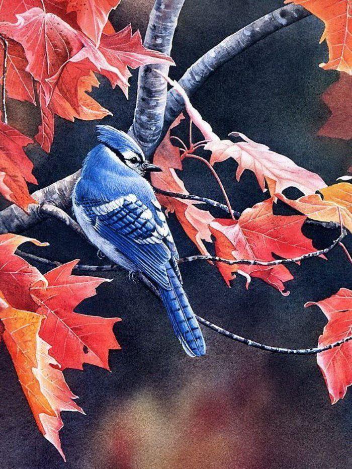 Susan Bourdet ~ I love Eastern Bluejays ♥