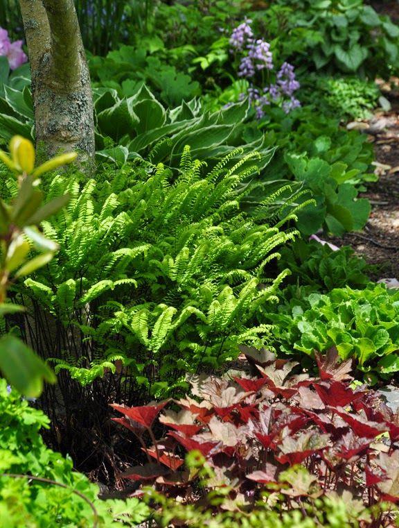Best Garden Ideas Images On Pinterest Cottage Gardens